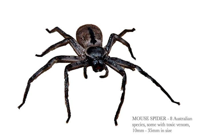 Mouse-Spider4