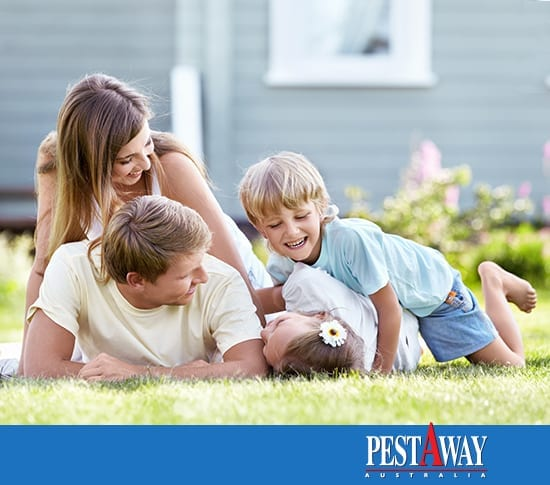 home-pest-protection