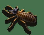 termites-australia