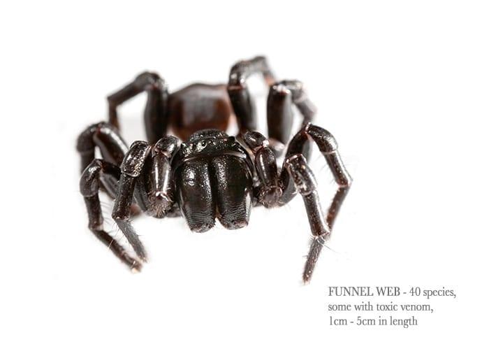 funnel-web1