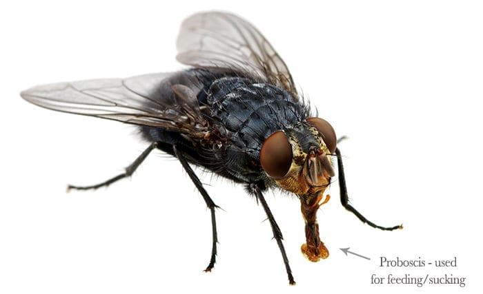 pestaway-fly